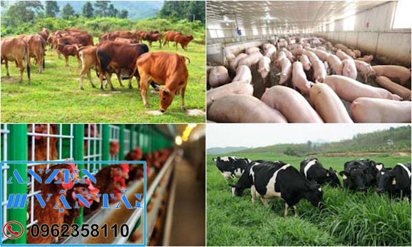 Vận chuyển thức ăn chăn nuôi đi Hà Nội